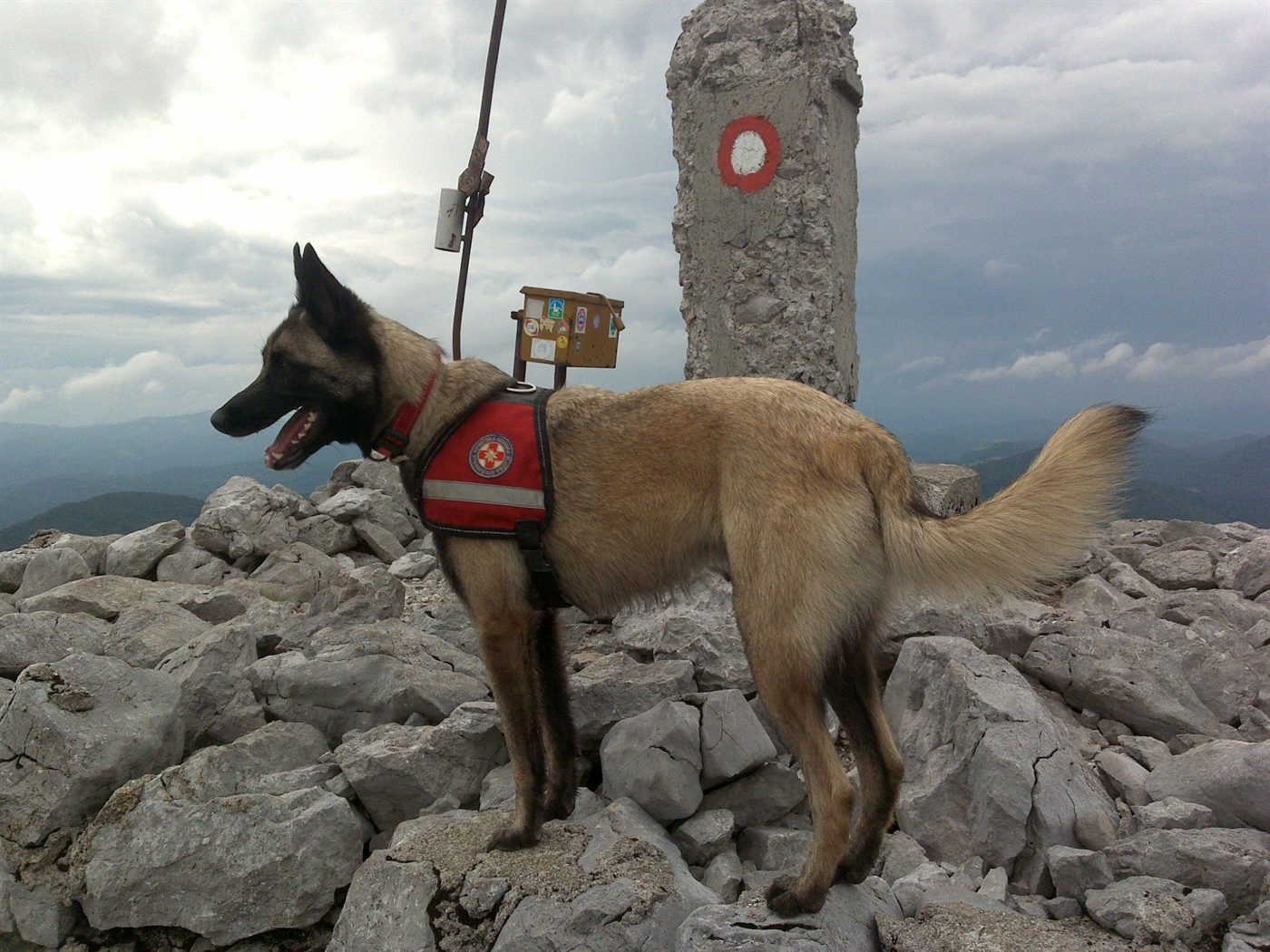 Preminuo potražni pas HGSS Stanice Rijeka - Luxa