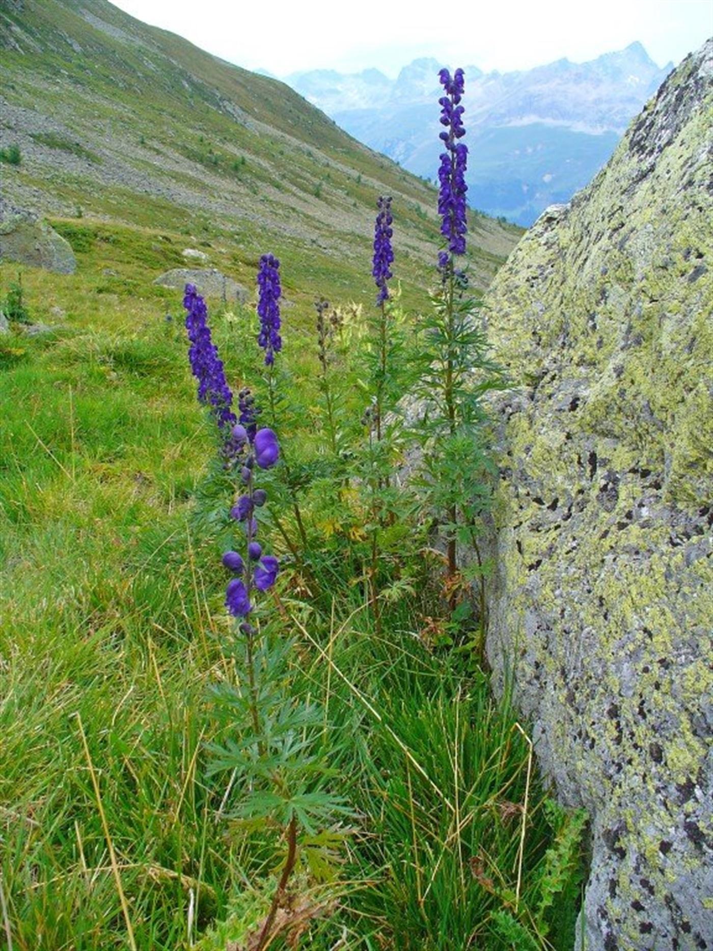 Spašavanje otrovane planinarke